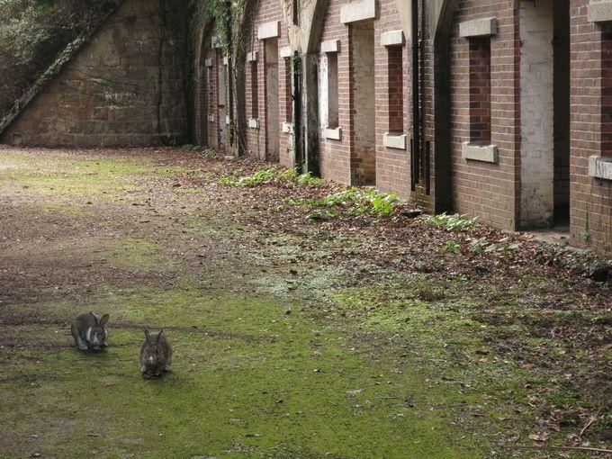 ラピュタみたいな廃墟で出会う野うさぎが可愛い過ぎる!