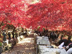 真っ赤に染まる山が見事!この秋行きたい神奈川県伊勢原の「大山詣り」