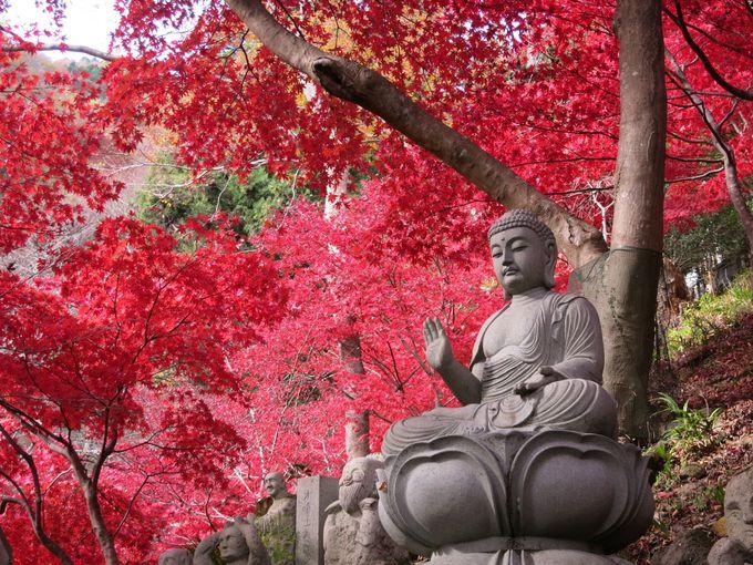7.大山詣り/神奈川県