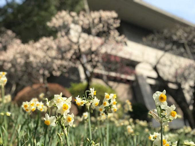 四季折々の花も楽しめる南斜面の庭を散策