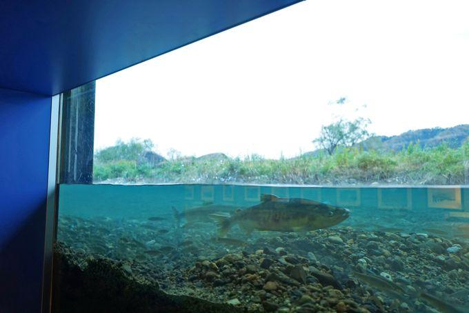 日本で最初の鮭の博物館「イヨボヤ会館」