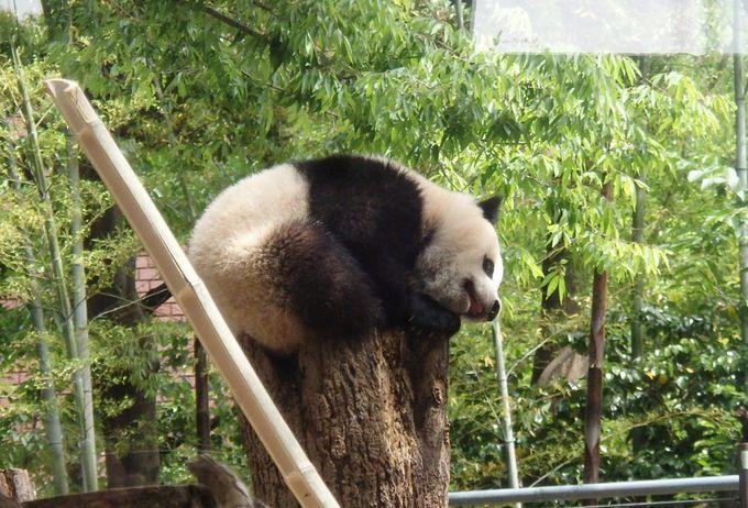 1.上野動物園