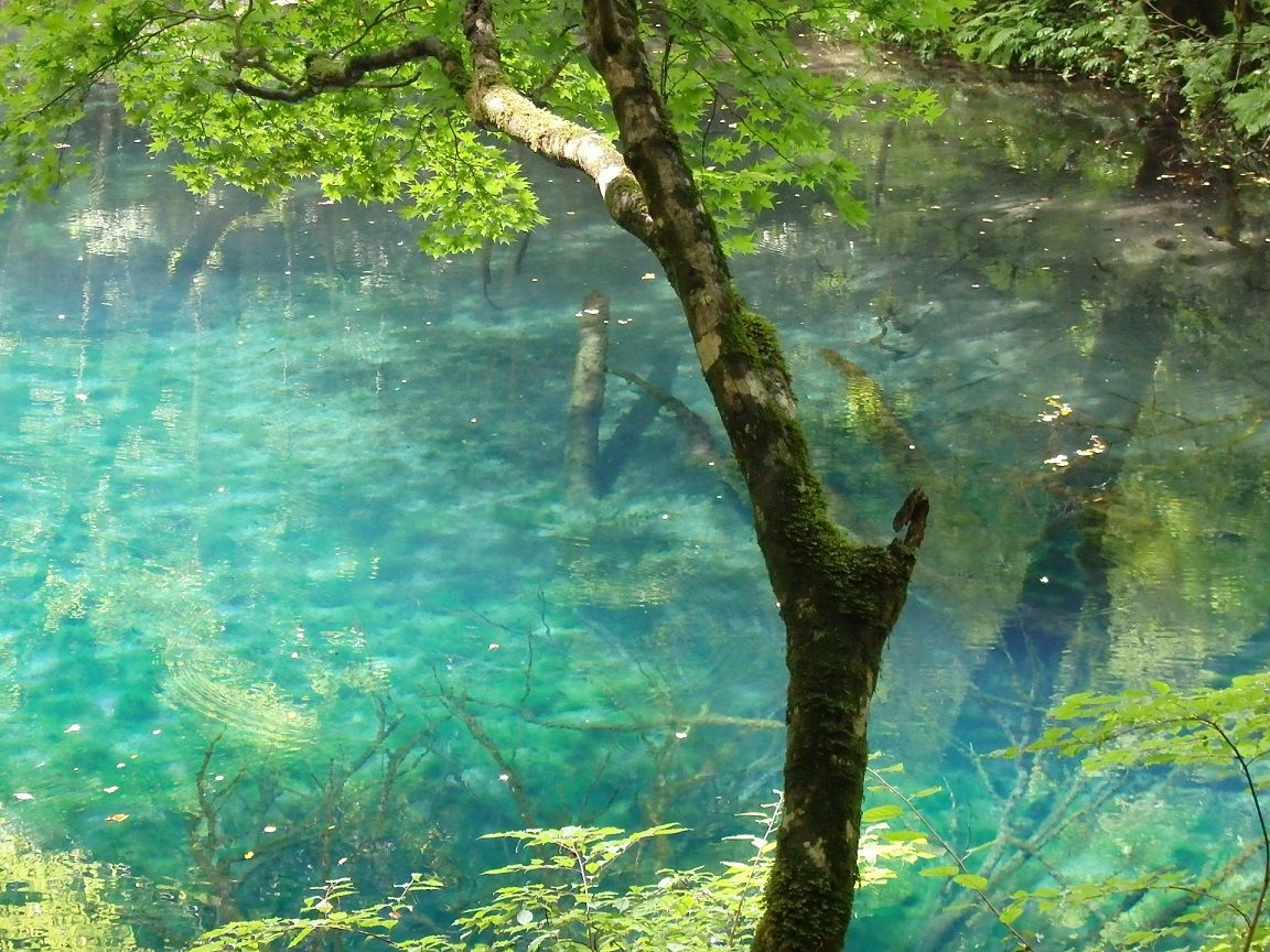 世界遺産の白神山地「十二湖」の神秘的な青い池は2つ!