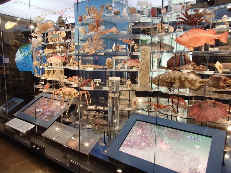 3階にはフタバスズキリュウの骨格標本