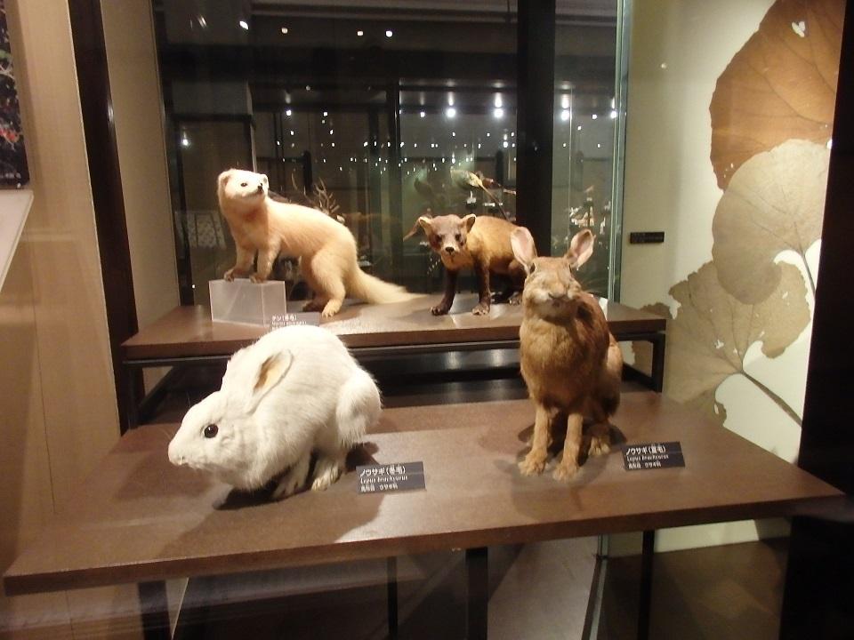 2階には忠犬ハチ公とカラフト犬ジロがいます!