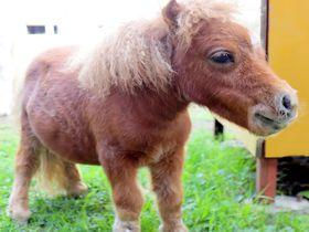 可愛い動物と出会える!信州スエトシ牧場で体感する癒し空間