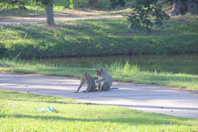 サル達が好き勝手にゴルフ場内を行ったり来たり