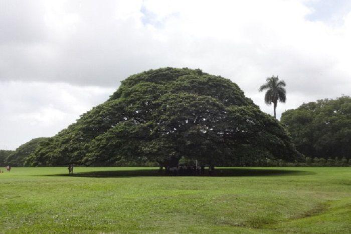 誰もが知っている、この木なんの木からスタート!