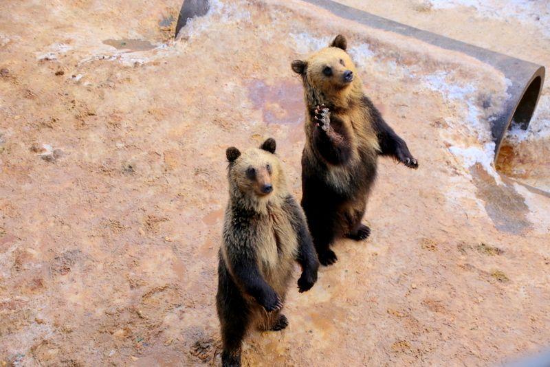 9.昭和新山熊牧場