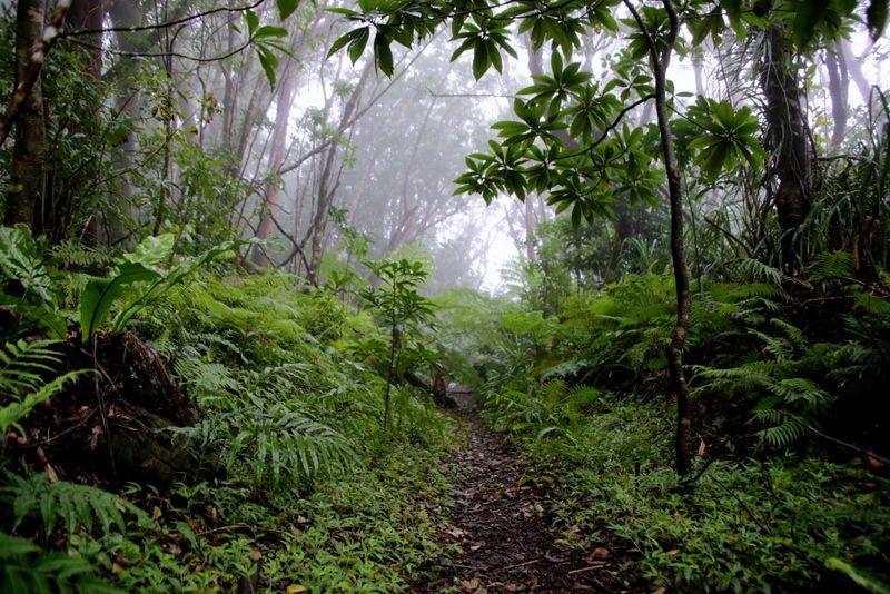 生い茂る亜熱帯の森へ!東京都民が住む最南端の島「小笠原諸島・母島」