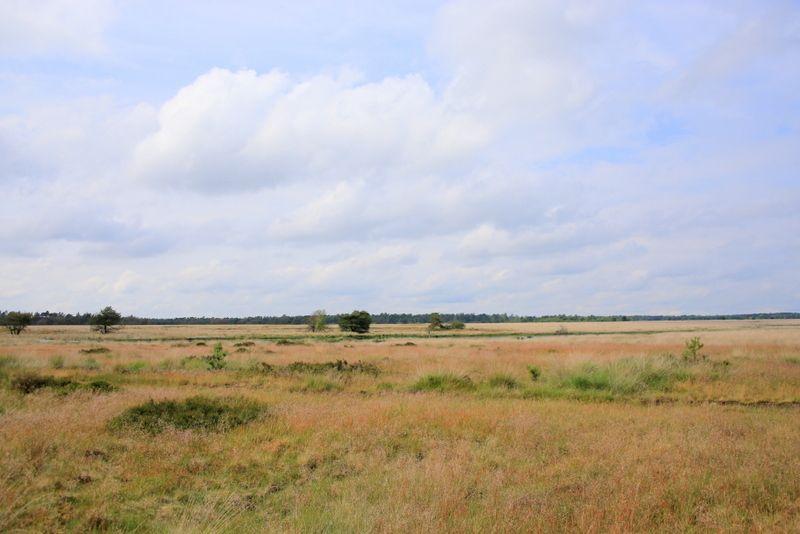 開放的な草原