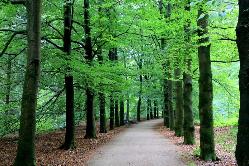 公園の半分以上を占める森