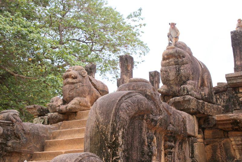 動物の石像と野生動物のコラボが見られることも