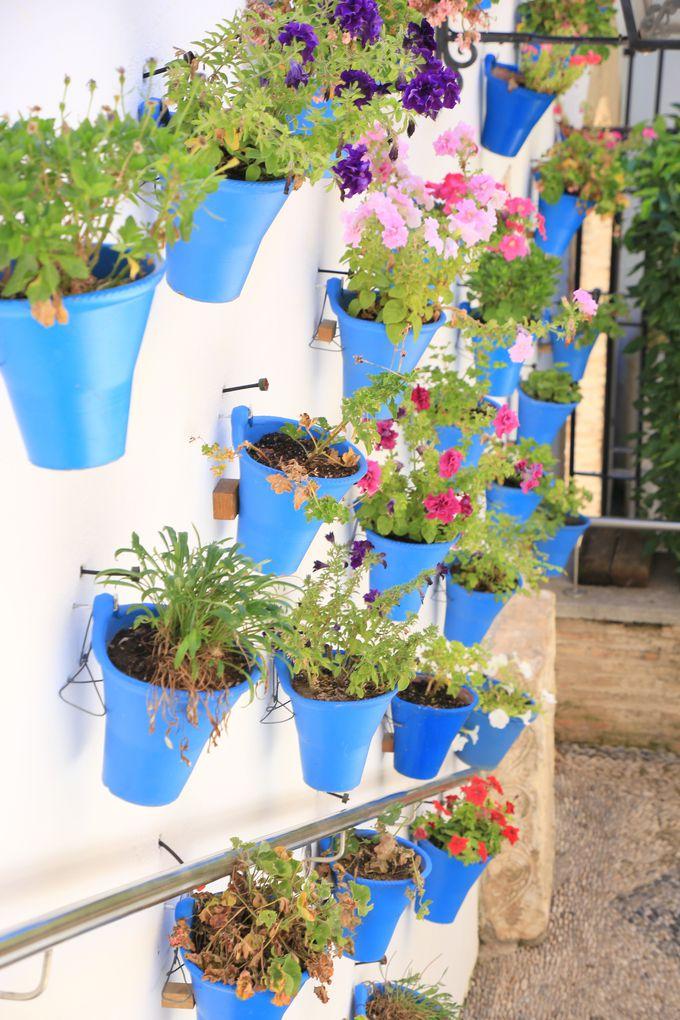 どの家にも美しい花が植えられている。その理由とは…?
