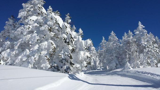 山頂エリアは極上のパウダーと地形遊びを堪能