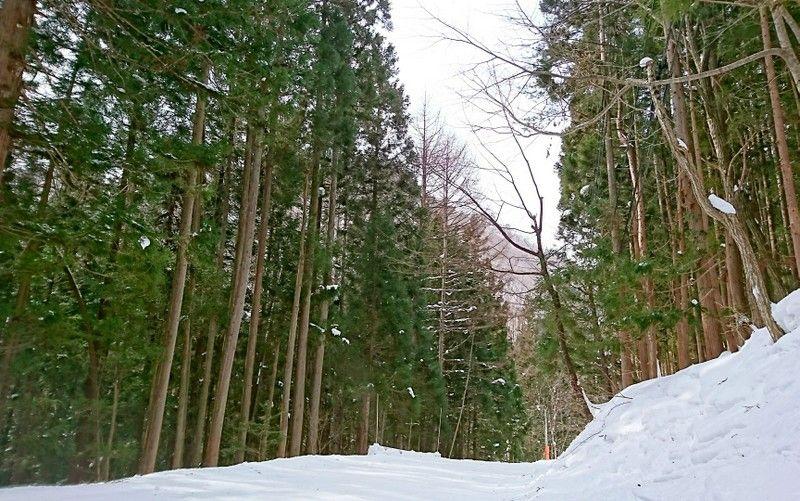 長い林間コースでファミリーも満足