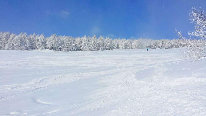 どこも滑り応えバッチリ!新潟「妙高杉ノ原スキー場」