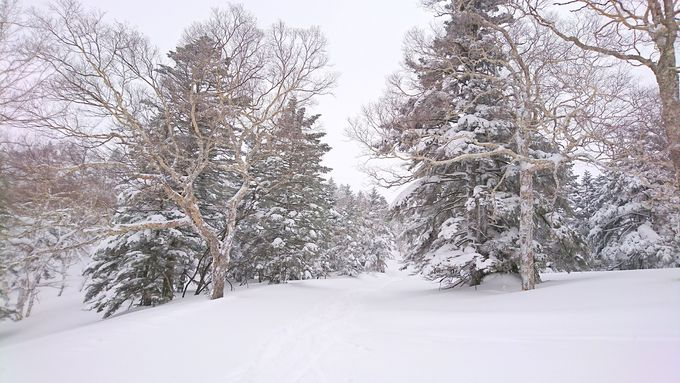 山奥スキー場と駅正面の湯!長野「志賀高原スキー場」