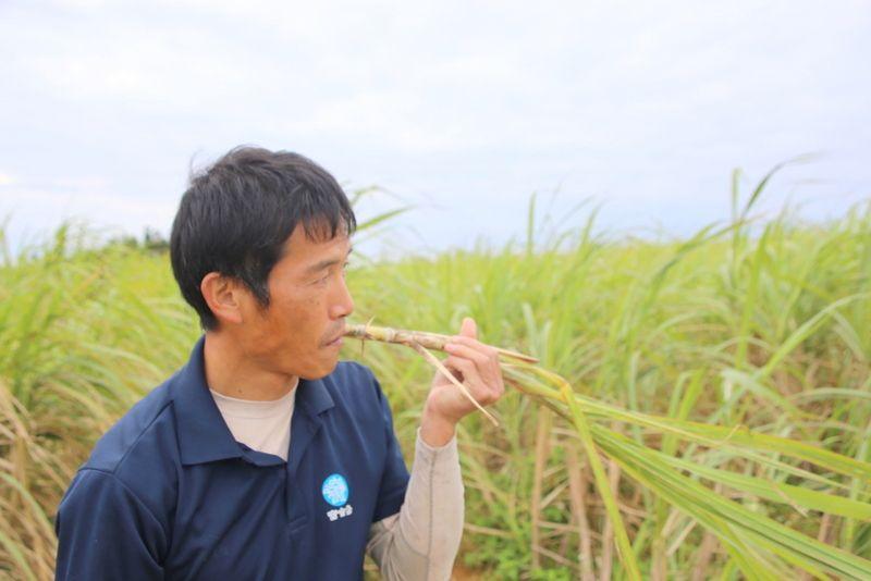 さとうきび収穫から黒糖作りも!沖縄「オルタナティブファーム宮古」