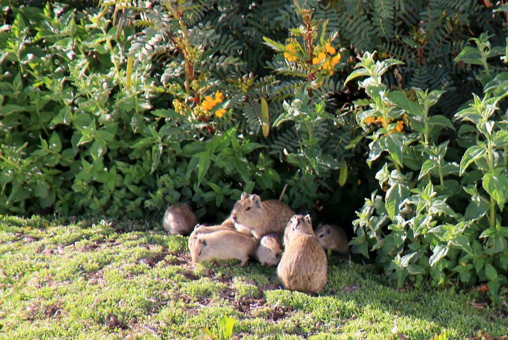 島で暮らす動物たちも必見