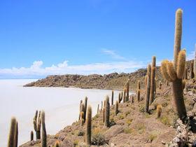 ボリビア・ウユニ塩湖を一望!奇怪に満ちた「インカ・ワシ島」