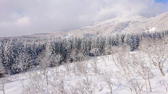 天然雪に恵まれたエリア