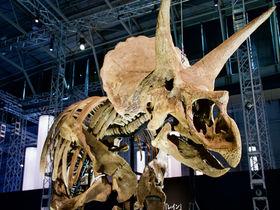 世界一美しいトリケラトプスが日本に初上陸!横浜「恐竜科学博」