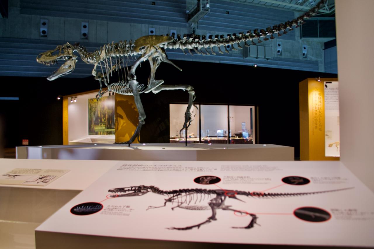 1つ1つの化石が語る恐竜の生涯