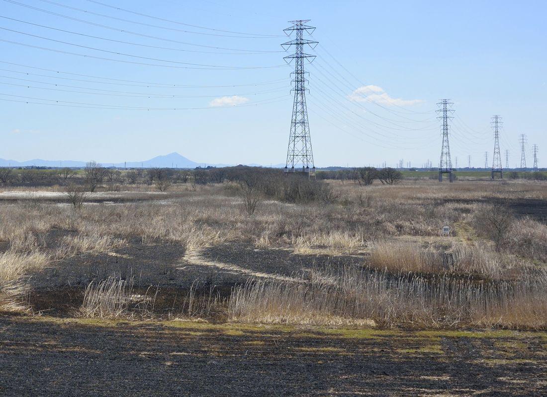ヨシ焼き後の景観・特色ある第3調節池のヨシ原