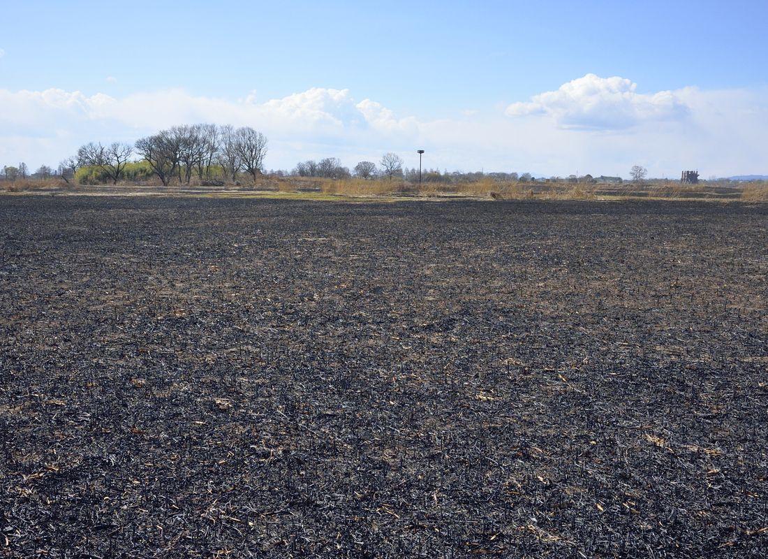 ヨシ焼き後の景観・谷中村史跡保全ゾーン