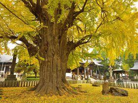 鎌倉時代から続く古刹と輝く黄葉の大イチョウ 栃木「鑁阿寺」