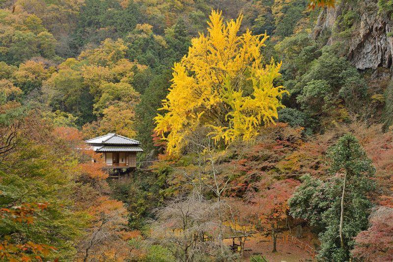 栃木県の低山ハイキング「行道山」古刹を巡る展望の尾根
