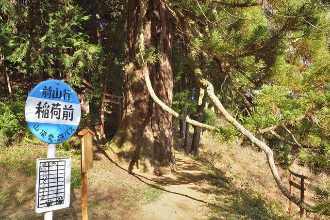巨木4本目・集落の展望地に立つ巨木「越沢稲荷の大スギ」