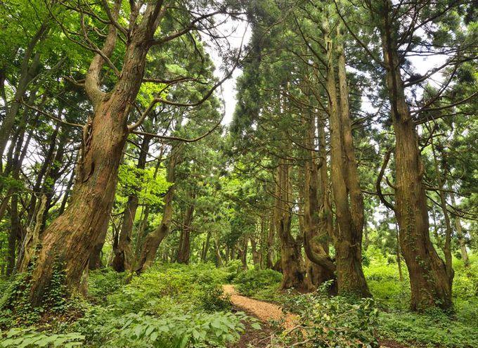 異形の巨樹が集う森