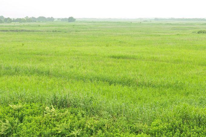 広大な湿地の自然風景