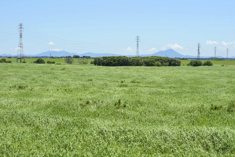 渡良瀬遊水地の見所5選〜谷中湖の外側に広がるヨシ原と湿地の風景〜
