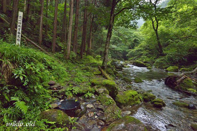 巨木が立つ場所・名水の湧く安谷川の清流