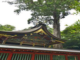関東随一の古社・鹿島神宮で巨木巡り〜広大な社叢は巨木の宝庫