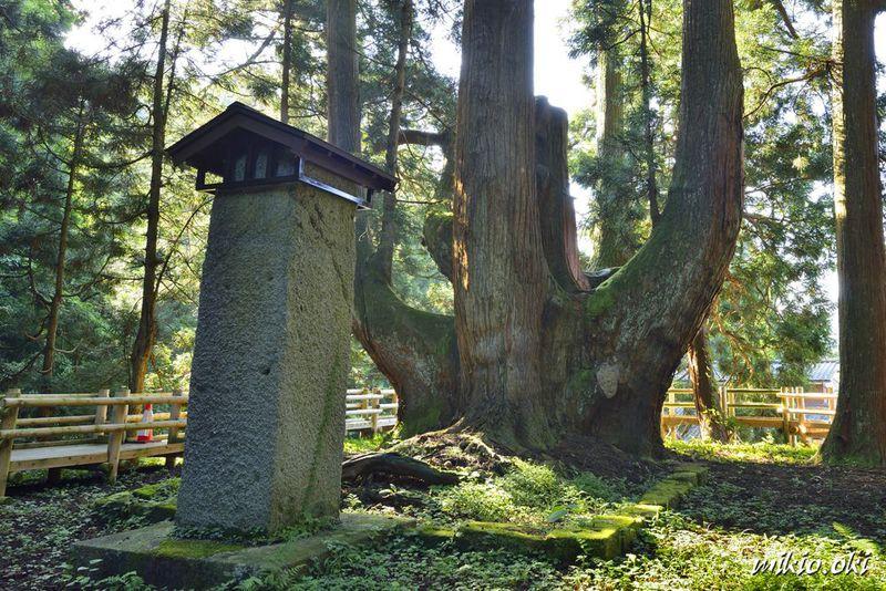 三川の将軍杉〜水と緑の里・新潟の奥阿賀に立つ日本最大級の大杉