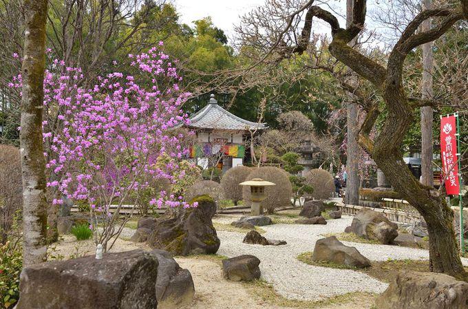 長泉院〜清雲寺と合わせて参詣したい桜の名所