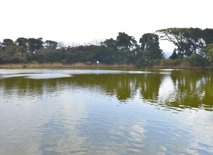 神秘の景勝地・大瀬崎のビャクシン樹林