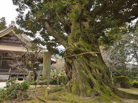筑波山の名刹・薬王院〜巨木茂る境内から目指す山頂