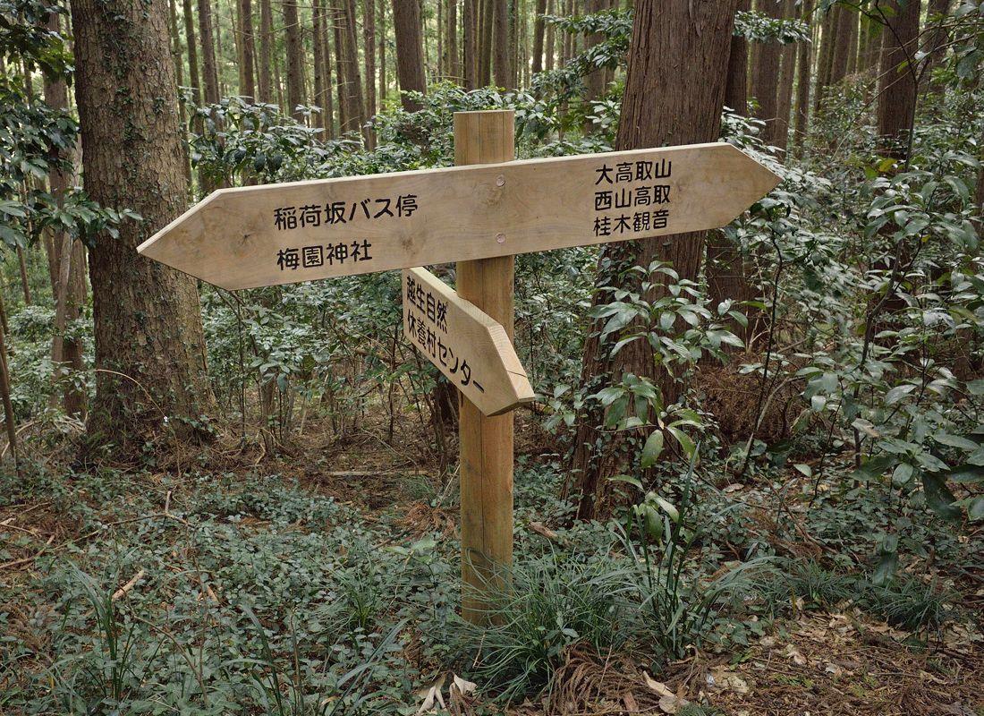 越生の梅の里に聳える山・大高取山