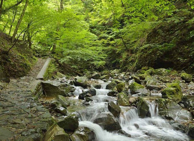 竜化の滝〜塩原十名瀑の筆頭