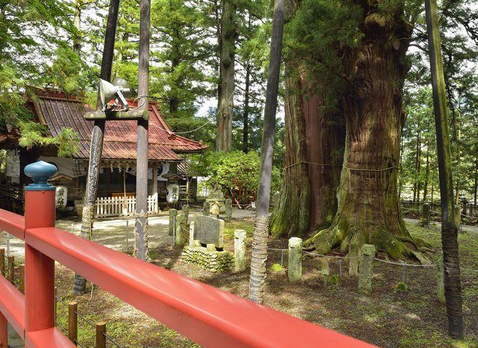 塩原八幡宮の逆杉〜栃木県で最大の巨木