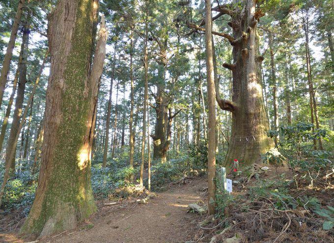 千葉山智満寺〜巨樹に包まれた神秘の霊場