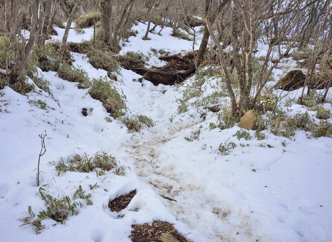 平坦地と登山ルートの後半