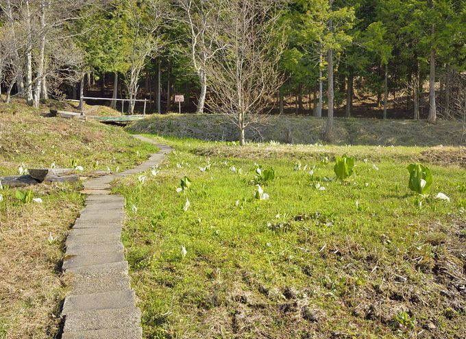 天王桜の最寄りの見所〜ホタルの里とオキノ桜