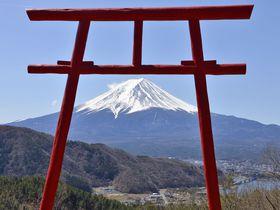 富士山信仰と巨樹の聖地へ参拝〜河口浅間神社と七本杉