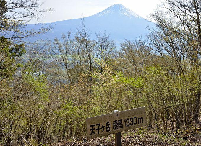 ハイキングルート案内〜長者ヶ岳から天子ヶ岳